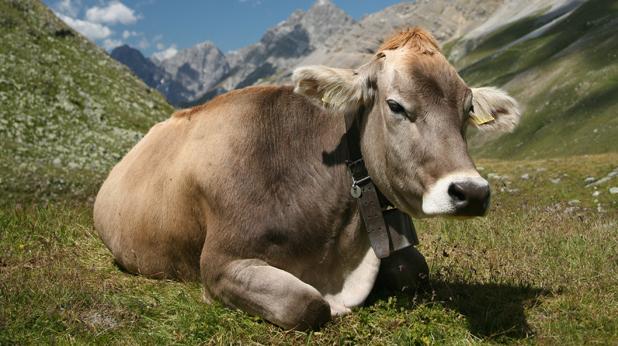 Крава