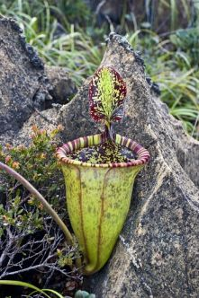 растение, 221