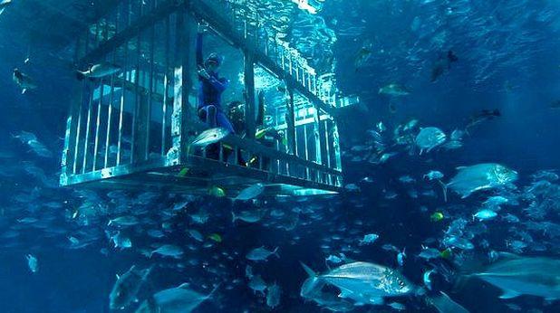 аквариум, дубай