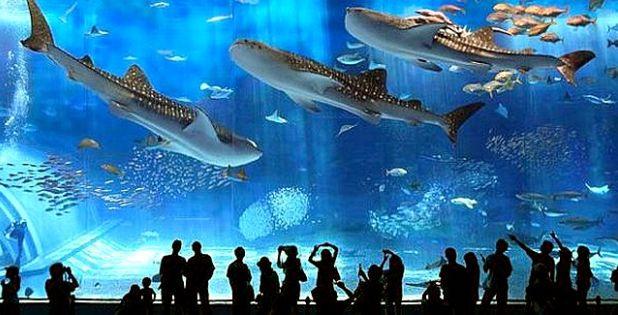аквариум, окинава