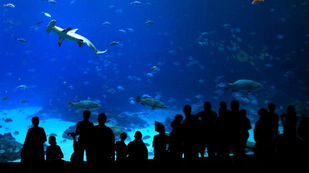 аквариуми