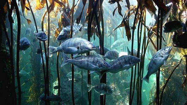 аквариум. южна африка
