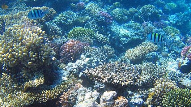океан, корали