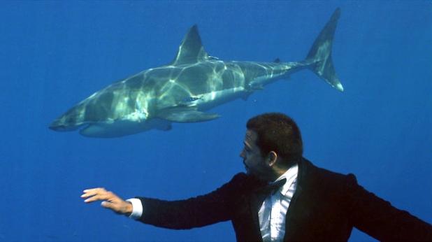 дейвид блейн, акула