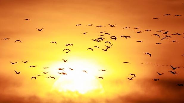 птици, изгрев