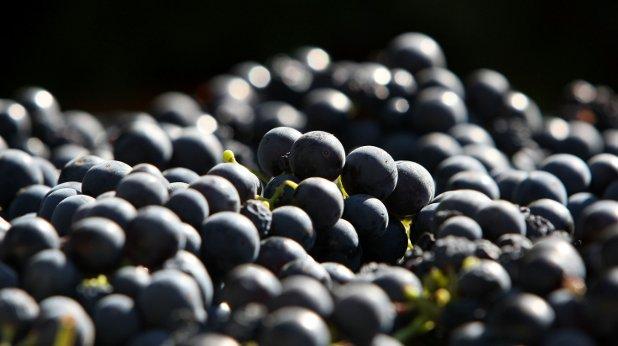 грозде