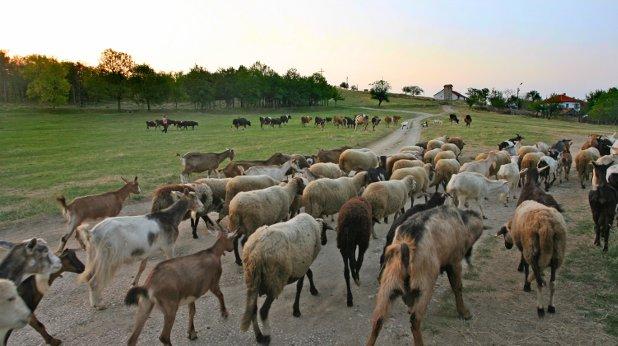 кози, село