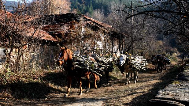 коне и дървета