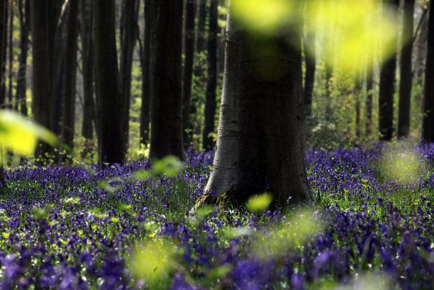 пролет, цветя