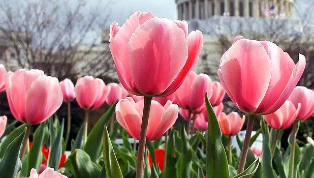 цветя, пролет