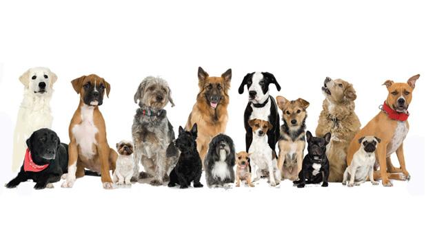Домашни кучета