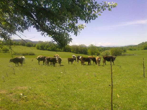 дивата ферма