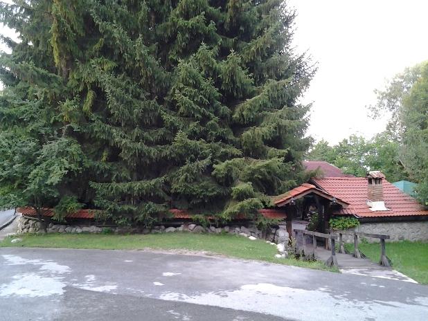 банско_реп