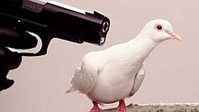 гълъб, пистолет