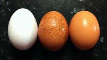 яйца221