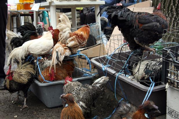 птичи пазар