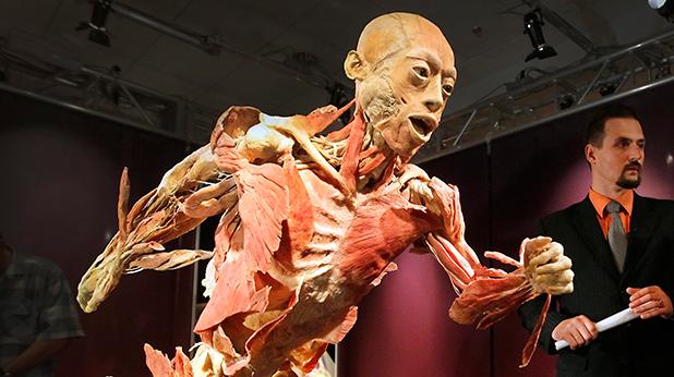 изложба, човешко тяло