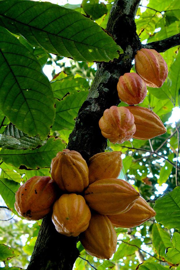 favorite fruits