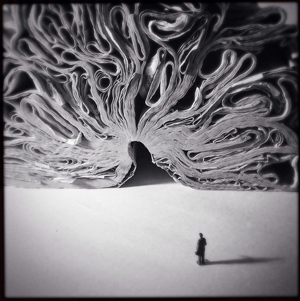 iphone photos of the year