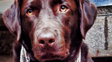 кучето сара