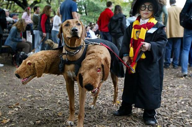 Малкият Хари Потър и Флъфи