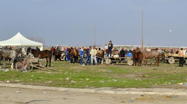 пазар на коне