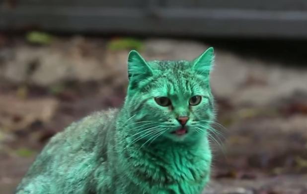 зелената котка от варна