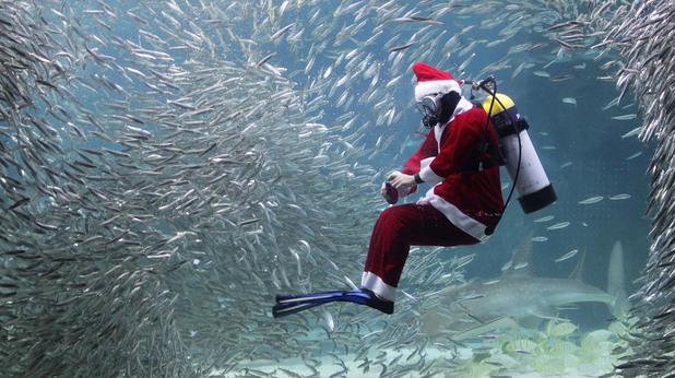 В Сеул водолази се облякоха като Дядо Коледа и заснеха подводна фотосесия