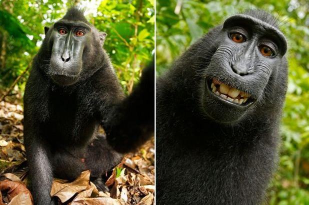 маймунско селфи