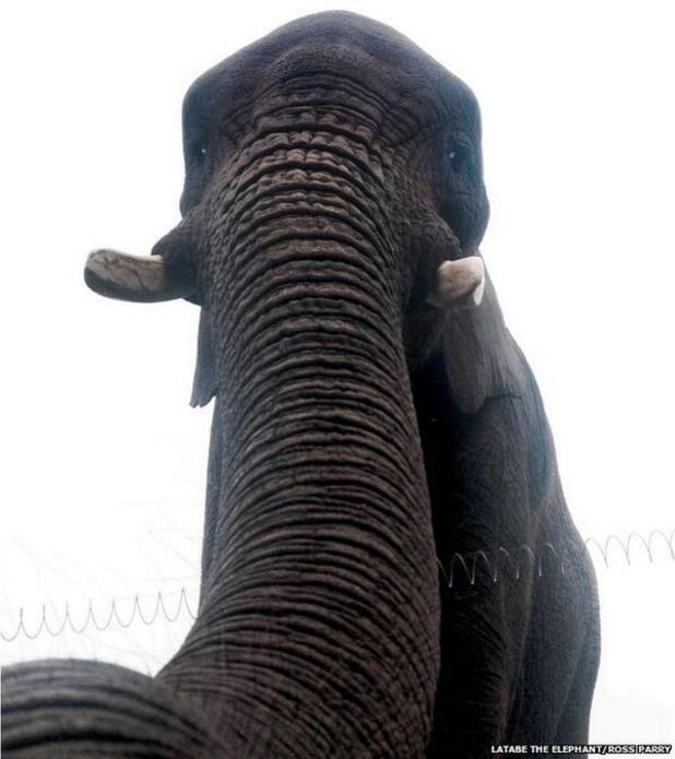 слон, селфи