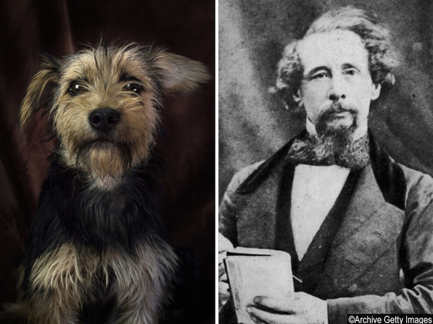 Кучета приличащи на известни писатели