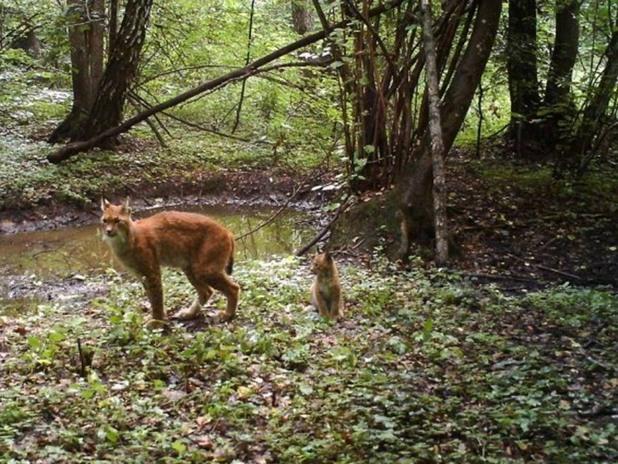 Животните в Чернобил