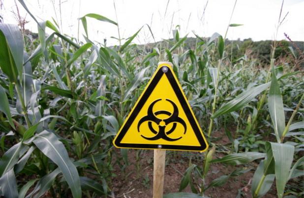 Генетично модифицирани посеви от соя