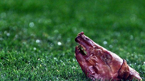 свинска глава, хвърлена от феновете на Барса в мач с Реал заради трансфера на Луиш Фиго