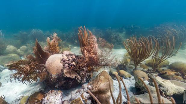 Google Street View предлага разходка под вода