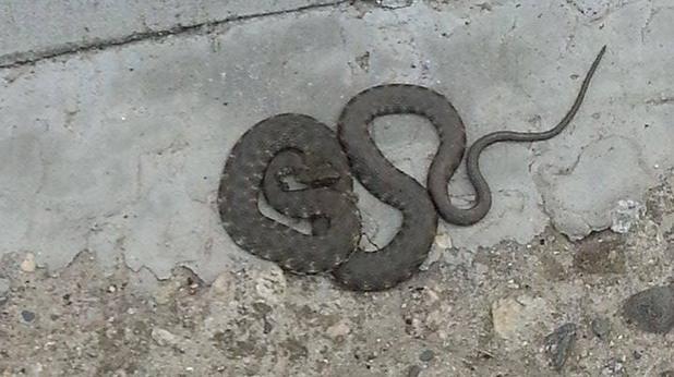 змия, боби стоянов