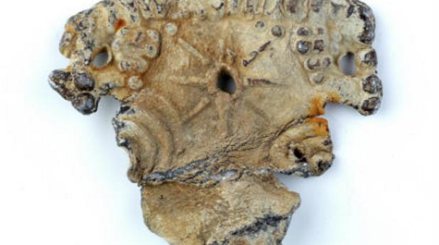 бурканий, находка, археология