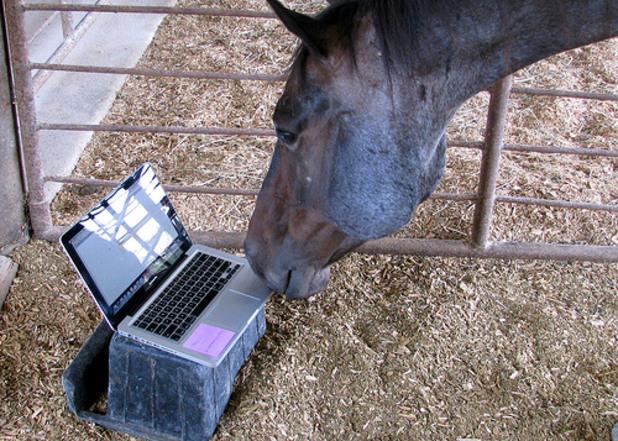 Животни ползват Фейсбук