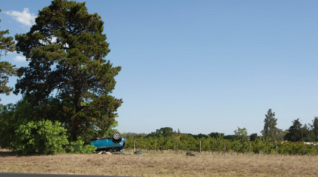 катастрофа, инцидент, птп, дърво