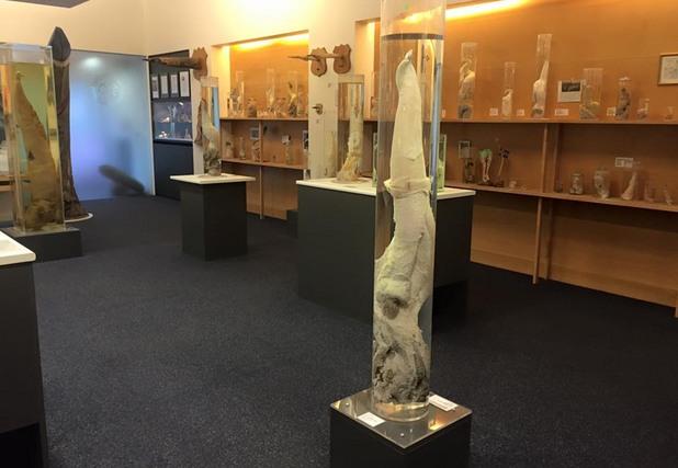 Палеонтологичния музей в Рейкявик