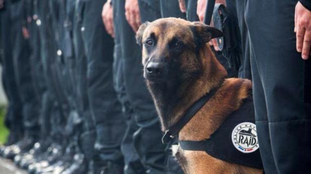 Кучето Дизел, загинало в Сен Деми