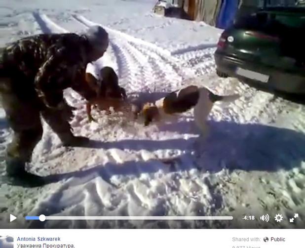 Видео как човек тренира кучетата си