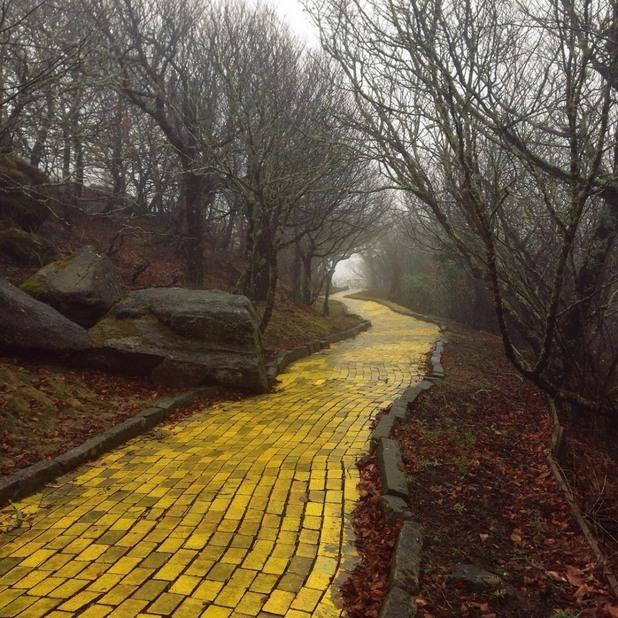 """Път от жълти павета в изоставения парк """"Вълшебникът от Оз"""" в Северна Каролина, САЩ"""