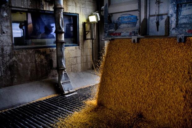 царевичен сироп, царевица