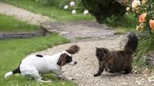Котки сещу кучета