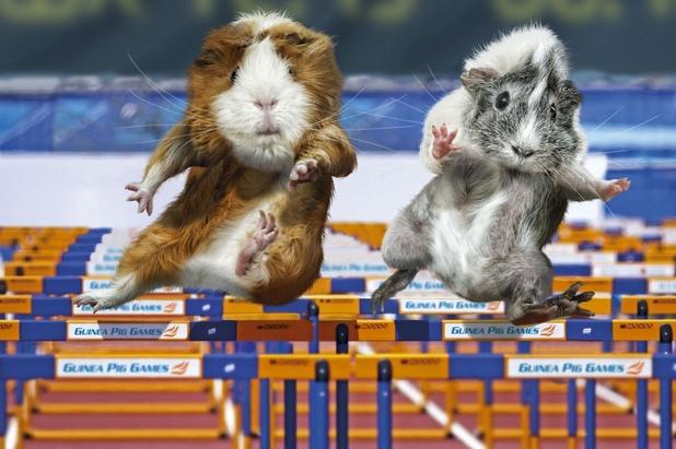 олимпийски игри за животни