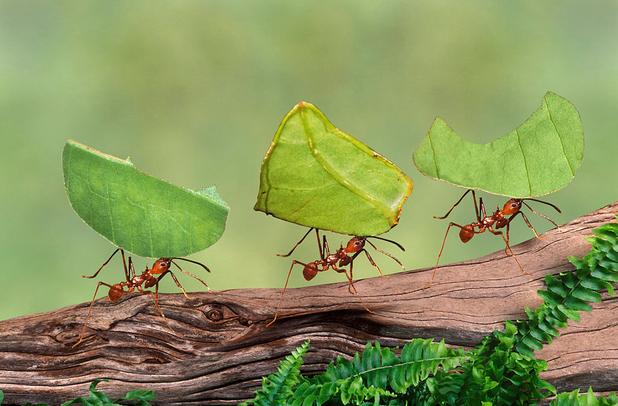 мравка, мравки