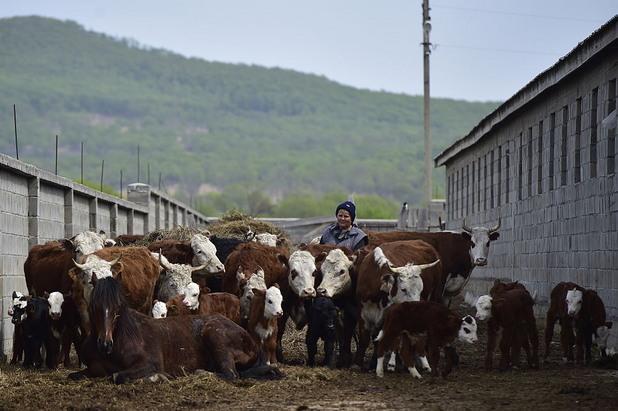 животновъдство