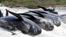 Китове