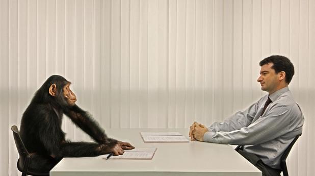 Маймуна на интервю за работа